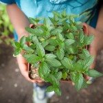 Child holding plant in TNCS greehouse